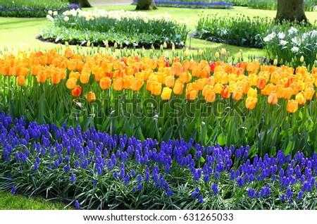 Orange Tulips Flowerbed Garden Design Orange Stock Photo (Safe to ...