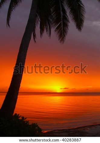 Orange Twilight - stock photo