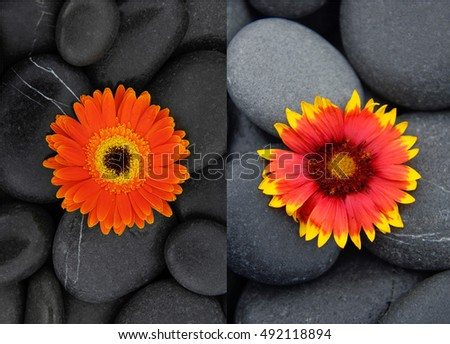 Orange two gerbera and pile of stones