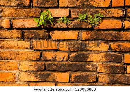 Orange wall make from vintage brick with little plant, ancient Thai style, Ayutthaya, Thailand