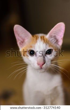 Orange, white cat looking attentively direct to the camera with light reflection in the eye.. Shallow DOF, focus to the eye. - stock photo