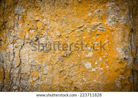 orange wood texture , tree texture, orange driftwood - stock photo