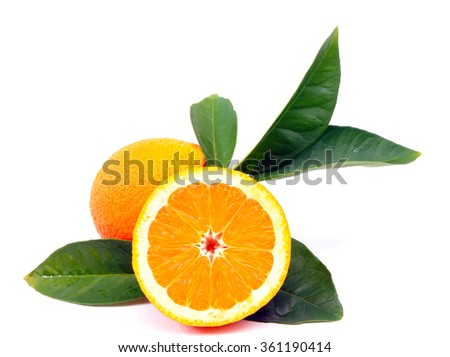 Oranges harvested in an organic cultivation, photographed on white background