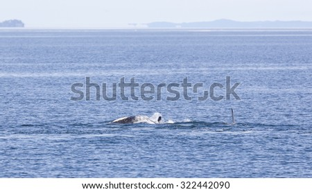 Orca jumping out of water in Johnstone strait, Vancouver Island, British Columbia, Canada - stock photo