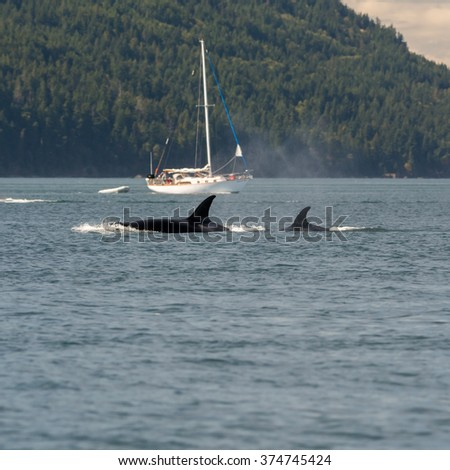 Orcas Boats - stock photo