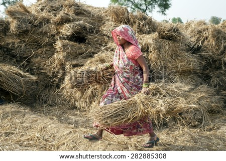 ORCHA,INDIA -  APRIL  23, 2015: Unidentified Indian woman working on the field on April  23, 2015 in Orchha, Madhya Pradesh, India. India ranks second worldwide in farm output. - stock photo