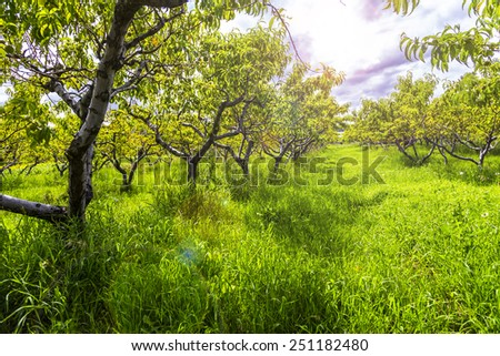 orchand landscape - stock photo