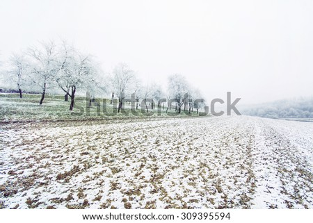 Orchard on a snow covered hill - stock photo