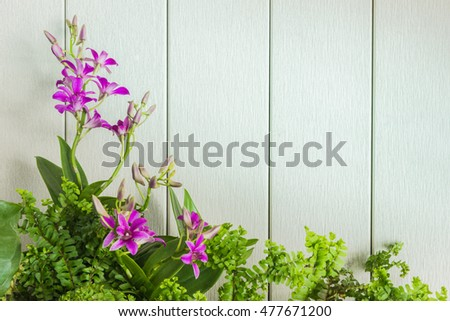 orchid and leaf on white wood background