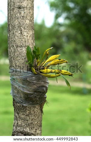 orchid attach with big tree in garden decoration.