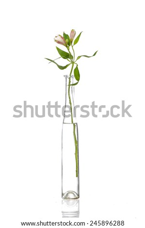 orchid bunch in vase on white background - stock photo