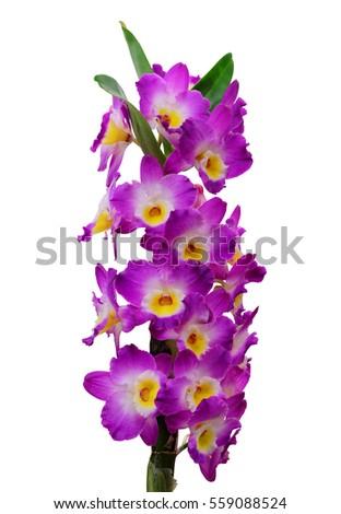 """Résultat de recherche d'images pour """"orchidée dendrobium"""""""