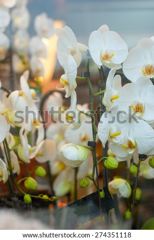 Orchid double exposure - stock photo