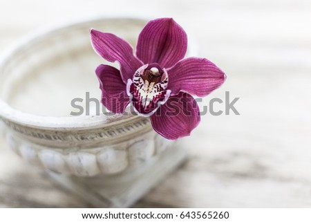 Orchid flower and green leaves background in garden. Orchid is considered the queen of flower in Thailand.