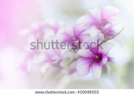 orchid  flower background,