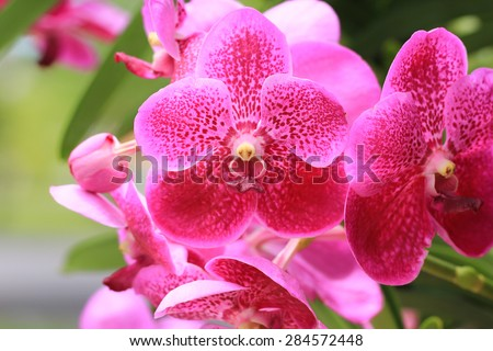 Orchid flower in a garden with soft focus.