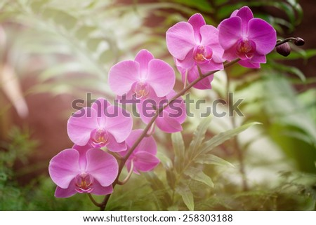 orchid flower in a green natural garden - stock photo