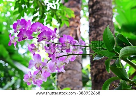 orchid flower in the forest, natural orchid, orchid garden - stock photo