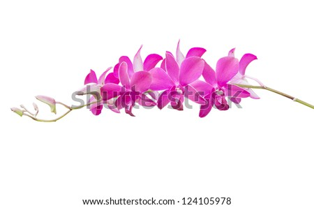 Orchid flower isolate on white - stock photo