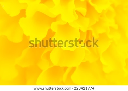 Orchid flower isolate on white background - stock photo