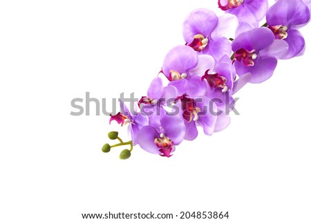 orchid flower, isolated