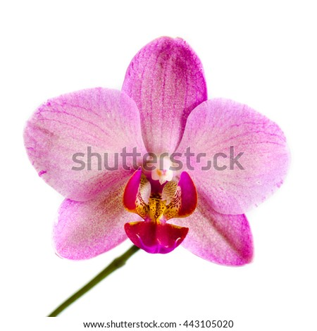 orchid flower isolated on a white background - stock photo