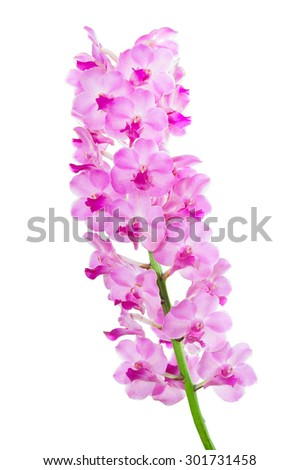 orchid flower isolated on black background
