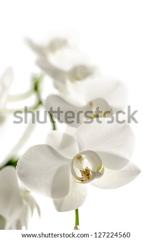 Orchid flower isolated over white background. Shallow dof. - stock photo