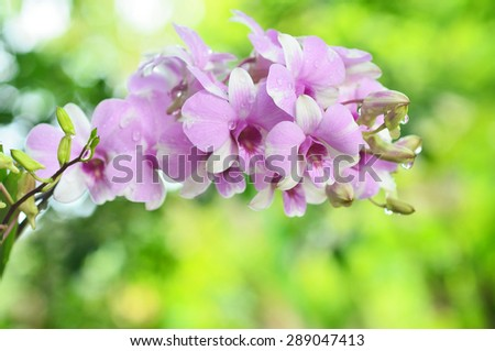 orchid flower on green nature background