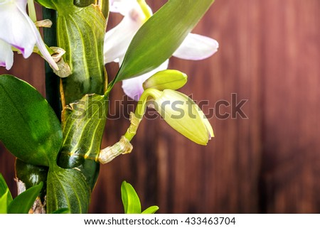 orchid flower on the wooden background