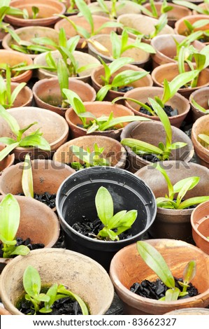 orchid flower pots in a plant nursery - stock photo