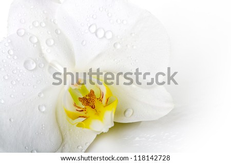 Orchid flower with dew