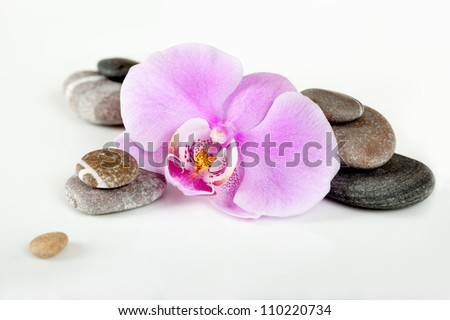 Orchid flower with sea pebbles on a white background