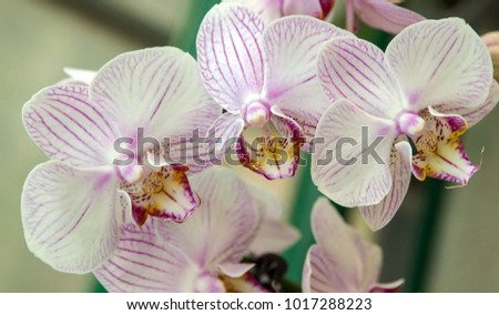 orchid flower with white buds background - beauty in nature