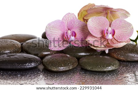 Orchid flowers and black stones with reflection  - stock photo