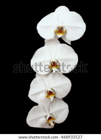 Orchid flowers are naturally different colors, ideal to extract a perfume fragrance.