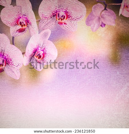 Orchid flowers background - stock photo