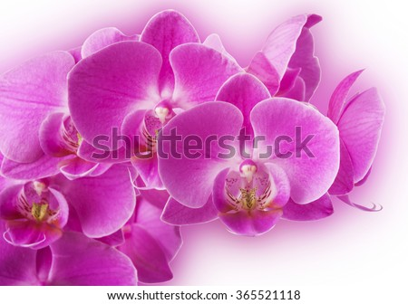 Orchid flowers border (selective focus) - stock photo