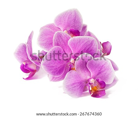 orchid flowers branch isolated on white background with shadow - stock photo