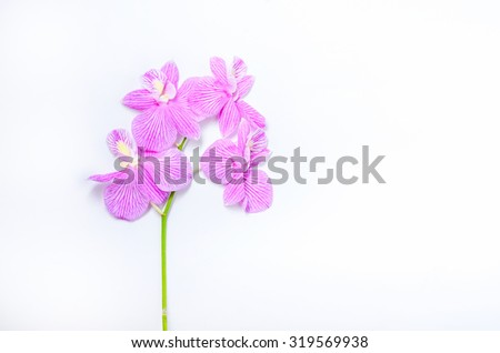 Orchid flowers fresh on white background