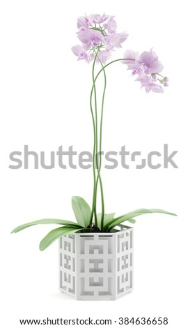 orchid flowers in pot isolated on white background - stock photo