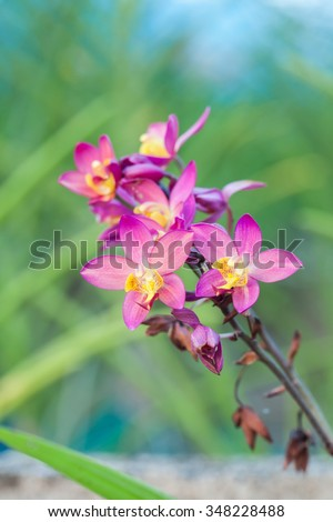 Orchid flowers in Thailand for background.