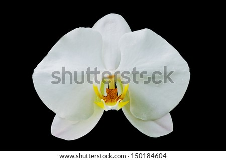 orchid flowers isolated on black background