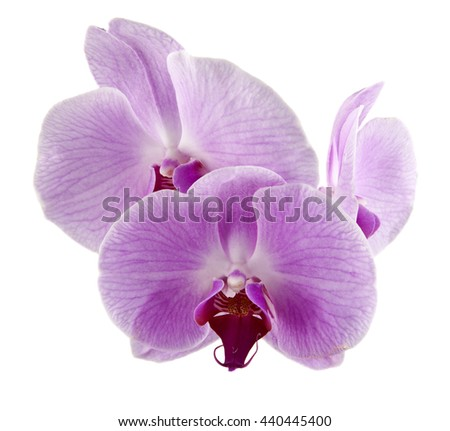 Orchid flowers isolated on white background closeup - stock photo