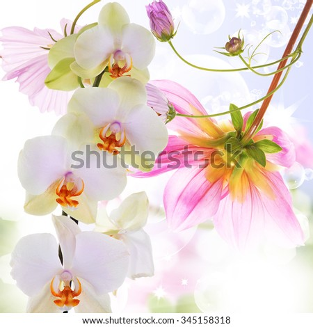 Orchid.Flowers on abstract blur spring nature background - stock photo