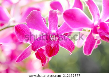 Orchid flowers on spring day.
