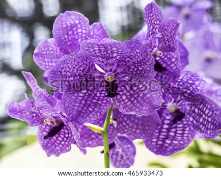 orchid flowers streaked beautiful for design and background.