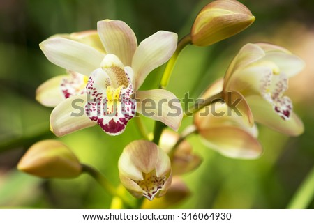 orchid flowers with leaves in garden - stock photo