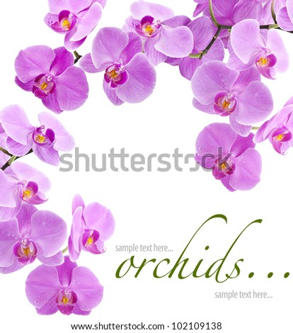Orchid flowers with water drops, greetings card (with sample text) - stock photo