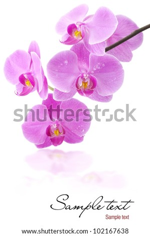 Orchid flowers with water drops, with clipping paths, greetings card (with sample text)